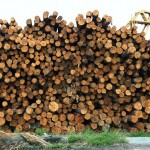 Burn Wood Instead Of Coal To Produce Electricity!