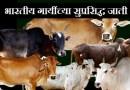 ह्या भारतीय जातीच्या गाईं समोर विदेशी हायब्रीड गायी अगदी फिक्या आहेत