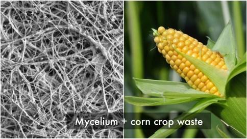 mycelium+ccrop