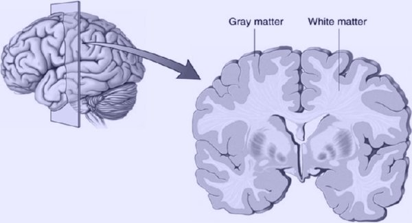 What is white matter in the brain composed of