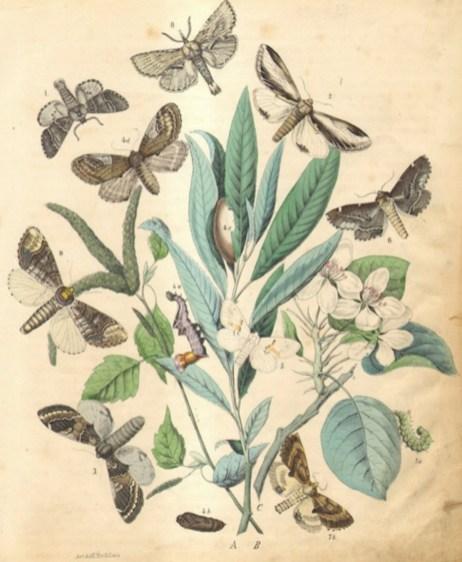 custom order 1863 marbled moths copy