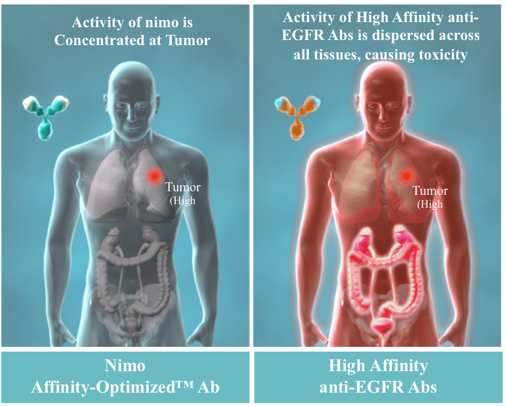 Nimo Affinity - Optimized