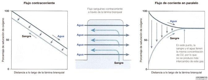 Flujo contracorriente y flujo de corriente en paralelo