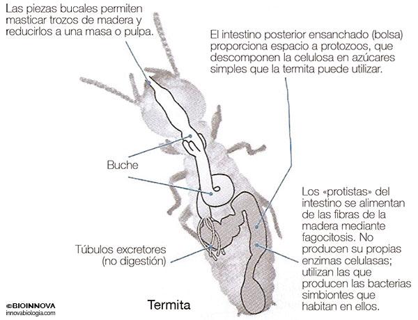 Diversidad del tubo digestivo – BIOINNOVA