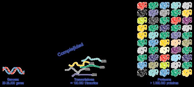 Complejidad del proteoma