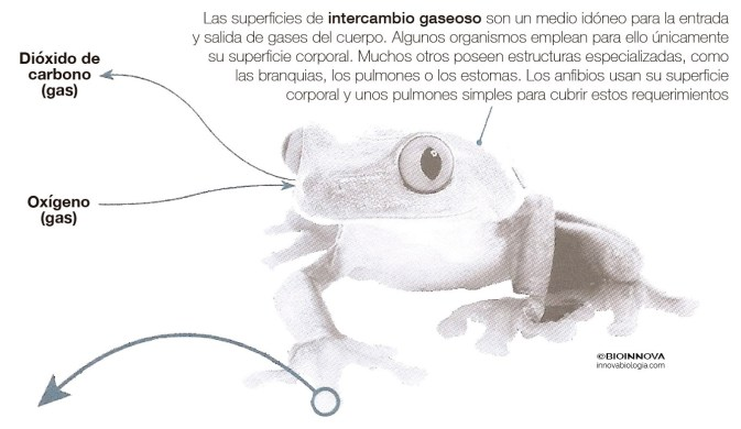 Intercambio gaseoso en animales