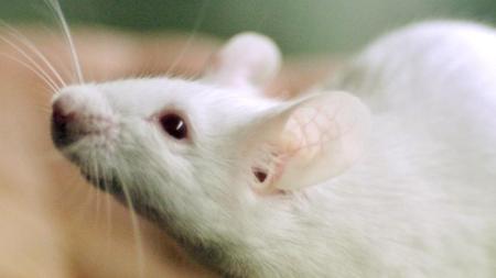 muis-weer-jong