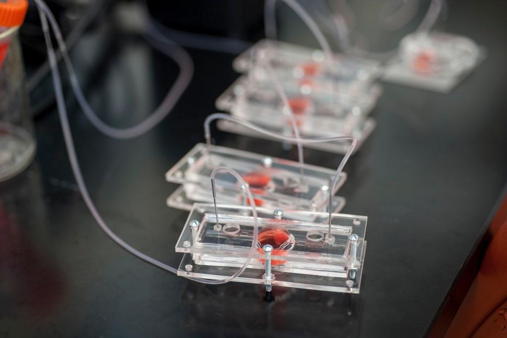 Body on a chip, Regenerative Medicine