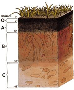 Soil profile 236x288 38.76 KB