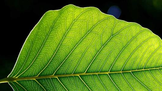 Artificial Leaf Design