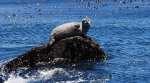 New flu virus found in seals concerns scientists
