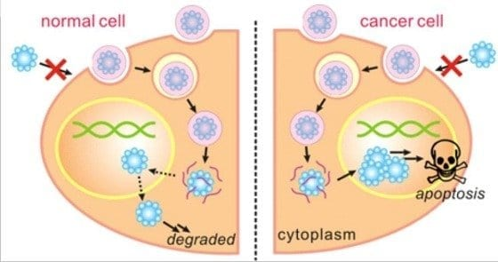 Tiny capsule effectively kills cancer cells