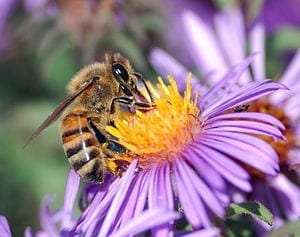 Pollinators: Variety is the spice of life