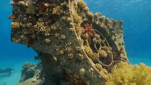 Artificial Reef in Red Sea Teems with Life