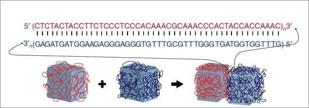 Programmable glue made of DNA directs tiny gel bricks to self-assemble