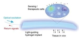 Hydrogel implant enables light-based communication with cells inside the body