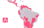 New Drug Candidates Show Promise for Cure for Chagas Disease