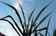 Scientists hail breakthrough to a new generation of biofuels made from waste