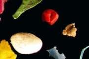Microplastics 'pose toxic threat to marine biodiversity'