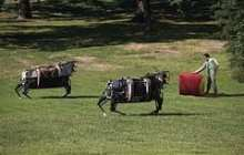 Japanese Team Dominates Competition to Create Rescue Robots