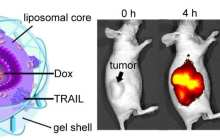 New Technique Targets Specific Areas of Cancer Cells with Different Drugs
