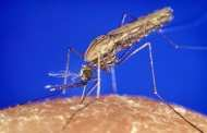 Scots scientists make major breakthrough on malaria