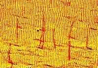 Self-aligning DNA wires for application in nanoelectronics