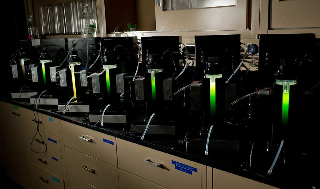 MSU advances algae's viability as a biofuel