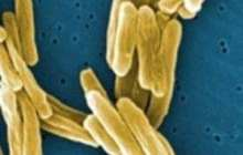 Fighting antibiotic resistance with 'molecular drill bits'