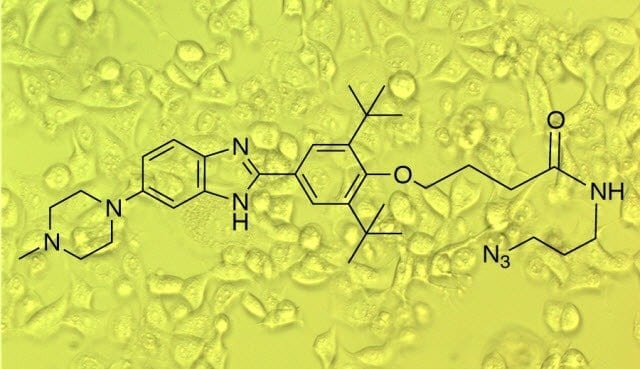 The new method identified a highly potent compound that causes cancer cells to attack themselves and die.IMAGE COURTESY OF THE DISNEY LAB, THE SCRIPPS RESEARCH INSTITUTE