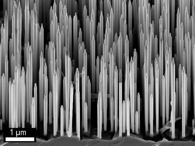 Electron microscope picture of wurtzite GaA/AIGaAs core-shell nanowires. (Dr. Dheeraj Dasa and Prof. Helge Weman, NTNU).