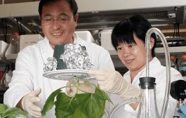 Using tobacco to thwart West Nile virus