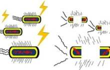 Pulsed electrical fields destroy antibiotic-resistant bacteria infecting burn injuries