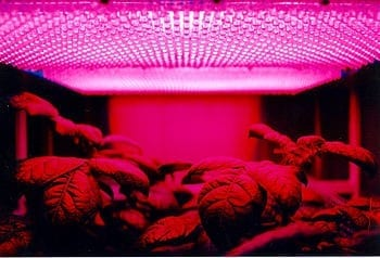 LED panel light source used in an experiment on plant growth by NASA. Pictured plant is a potato plant. (Photo credit: Wikipedia)