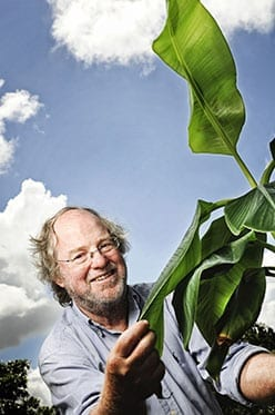 Distinguished Professor James Dale's research to develop provitamin A-enriched bananas for Uganda will move to human clinical trials soon.