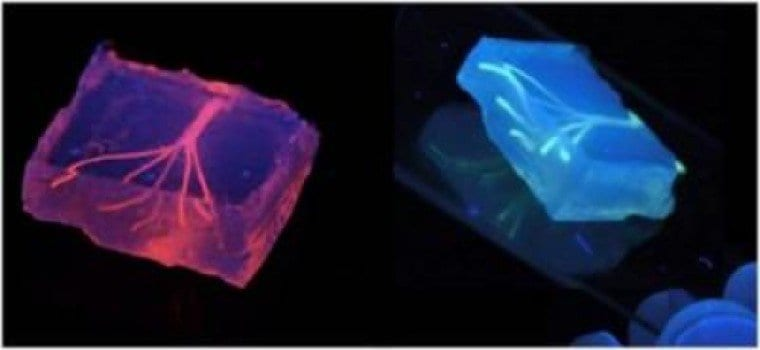 Artificial blood vessels are created using hydrogel constructs that combine advances in 3-D bioprinting technology and biomaterials. Credit: Image courtesy of Khademhosseini Lab