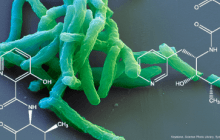New approach for tuberculosis drugs