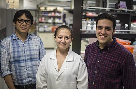 DANIEL ABERNATHY Andrew Yoo, PhD, (from left) Michelle Richner, Matheus Victor and their colleagues described a way to convert human skin cells directly into medium spiny neurons, a type of brain cell affected by Huntington's disease.