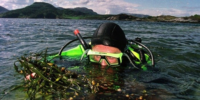 """Kelp can be turned into a kind of """"bio-crude"""" that can be further refined into a biofuel. Photo: Rune Petter Ness, NTNU Communication Division"""