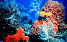 A glimmer of hope for corals as baby reef-builders cope with acidifying oceans