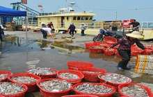 A sustainable approach for the world's fish supply