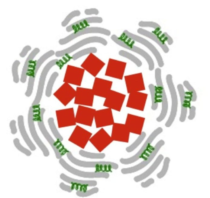 Paolo Decuzzi laboratory Each nanoparticle is composed of an iron oxide core (red squares) that is swathed in albumin (grey) and the anti-clotting agent tPA (green). The iron oxide cubes are about 20 nm on a side.