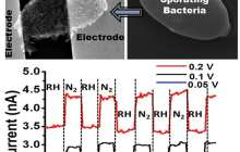 Tiny bio-robot is a germ suited-up with graphene quantum dots