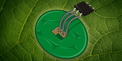 ETH scientists used cells form the tobacco plant to build the by far most sensitive temperature sensor. (Illustration: Daniele Flo / ETH Zurich)