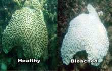 Climate engineering may save coral reefs, study shows