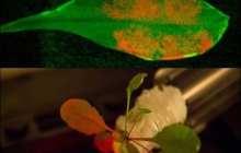 Nanobionics Supercharge Photosynthesis
