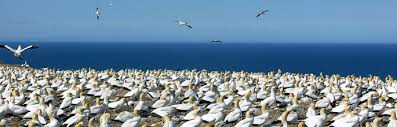 Global trends show seabird populations dropped 70 percent since 1950s