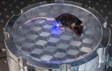 Stanford engineers develop a wireless, fully implantable device to stimulate nerves in mice