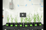 Root microbiome engineering improves plant growth