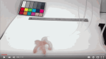 Soft robot changes color as it grips and walks (video)